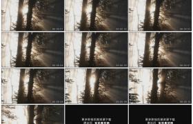 高清实拍视频素材丨阳光穿过雾气弥漫的森林