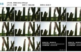 高清实拍视频丨摇摄高大的仙人掌树