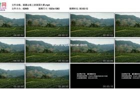 高清实拍视频素材丨摇摄山坡上的茶园大景