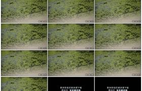 高清实拍视频素材丨雨天雨水滴落到长满绿萍的水面上