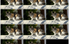 2K实拍视频素材丨晴天婆娑树影下一只休憩的小猫