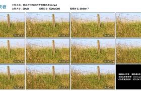 高清实拍视频丨铁丝护栏两边的野草随风摆动
