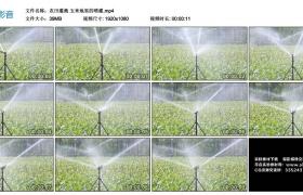 高清实拍视频丨农田灌溉 玉米地里的喷灌