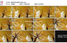 4K实拍视频素材丨摇摄秋天树林里挂满黄叶的树木