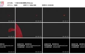 高清实拍视频丨一片紫色玫瑰花瓣飘过转场(带Alpha通道)