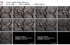 高清实拍视频素材丨太阳照射下的枯树后云雾流动