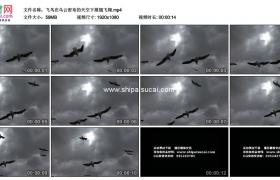高清实拍视频素材丨飞鸟在乌云密布的天空下展翅飞翔