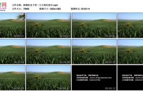 高清实拍视频素材丨移摄阳光下的一大片绿色麦田