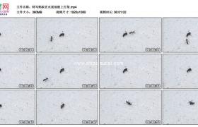 高清实拍视频素材丨特写蚂蚁在水泥地板上打架