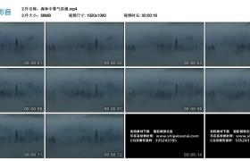 高清实拍视频丨森林中雾气弥漫