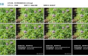 高清实拍视频丨烈日照射着紫色的土豆花