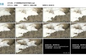高清实拍视频丨天气渐暖覆盖草地的积雪融化