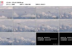 高清实拍视频丨在雪山前飞翔的鹰
