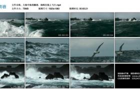 高清实拍视频素材丨大海中海浪翻滚,海鸥在海上飞行