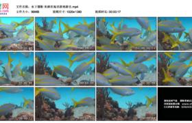高清实拍视频素材丨水下摄影 鱼群在海里游来游去