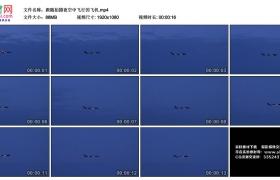 高清实拍视频素材丨跟随拍摄夜空中飞行的飞机