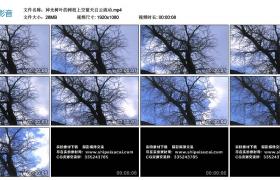 高清实拍视频丨掉光树叶的树枝上空蓝天白云流动