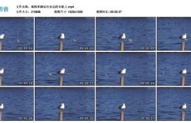高清实拍视频丨海鸥单脚站在水边的木桩上