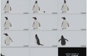 高清实拍视频素材丨在南极雪地上张望的一只企鹅