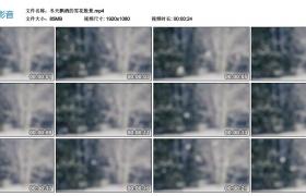 高清实拍视频丨冬天飘洒的雪花散景