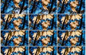 高清实拍视频素材丨摇摄阳光透射过秋天黄色的树叶