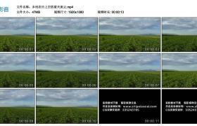 高清实拍视频丨乡村农田上空的蓝天流云