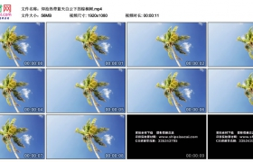 高清实拍视频素材丨仰拍热带蓝天白云下的棕榈树