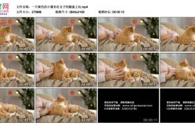 4K实拍视频素材丨一只黄色的小猫坐在女子的膝盖上玩