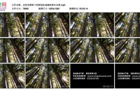 高清实拍视频丨从阳光照射下的树冠拉成森林树木全景