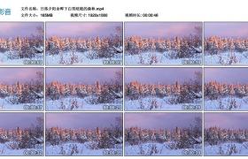 高清实拍视频丨日落夕阳余晖下白雪皑皑的森林