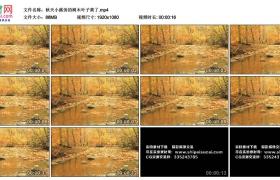 高清实拍视频素材丨秋天小溪旁的树木叶子黄了