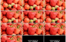 高清实拍视频素材丨摇摄果盘中新鲜的红色草莓