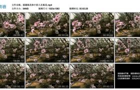 高清实拍视频丨摇摄桃花林中的几支桃花