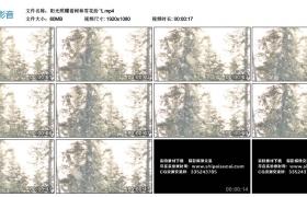 高清实拍视频丨阳光照耀着树林雪花纷飞