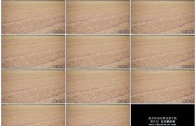 4K实拍视频素材丨摇摄土地里的种植的玉米