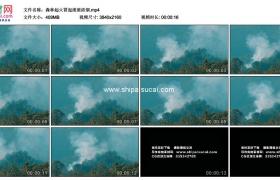4K实拍视频素材丨森林起火冒起滚滚浓烟