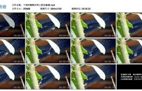 4K视频丨下雨时蜘蛛在网上四处躲避