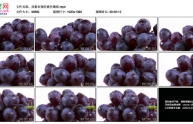 高清实拍视频素材丨挂着水珠的紫色葡萄