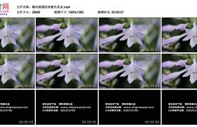 高清实拍视频丨随风摇摆的淡紫色花朵
