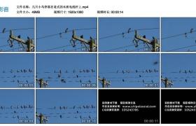 高清实拍视频丨小鸟停落在老式的木质电线杆上