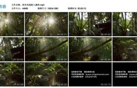 高清实拍视频素材丨阳光光线射入森林