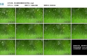 高清实拍视频丨雨水滴落到嫩绿色的草地上
