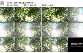 高清实拍视频素材丨仰拍树林里阳光透过树叶照射下来