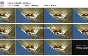 4K实拍视频素材丨黄蜂在蜂巢上飞进飞出