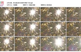 高清实拍视频素材丨阳光透过秋天的树叶照射下来