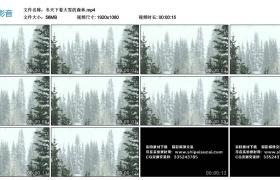 高清实拍视频素材丨冬天下着大雪的森林