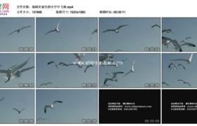 高清实拍视频素材丨海鸥在蓝色的天空中飞翔