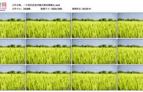 高清实拍视频丨一片绿色的麦田随风摆动慢镜头