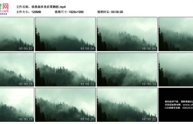 高清实拍视频素材丨清晨森林里浓雾飘散