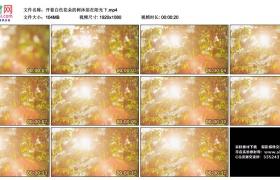 高清实拍视频丨开着白色花朵的树沐浴在阳光下